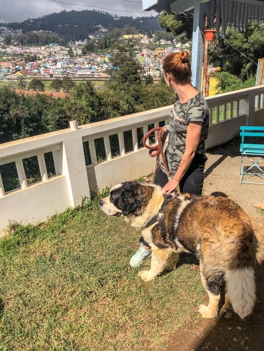 Výhľad a psík v Zostel Ooty