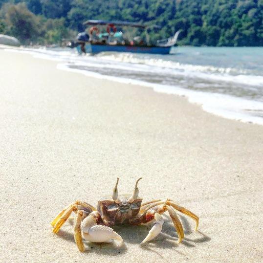 Monkey beach, Penang National Park